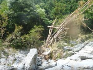 5mくらい上の樹に流木がひっかかっていた。