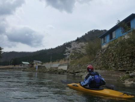 ご存じ76歳の現役カヤッカーノム爺。艇上から花見。